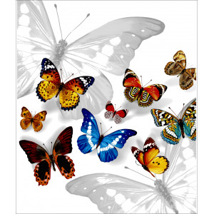 40x47 Бабочки